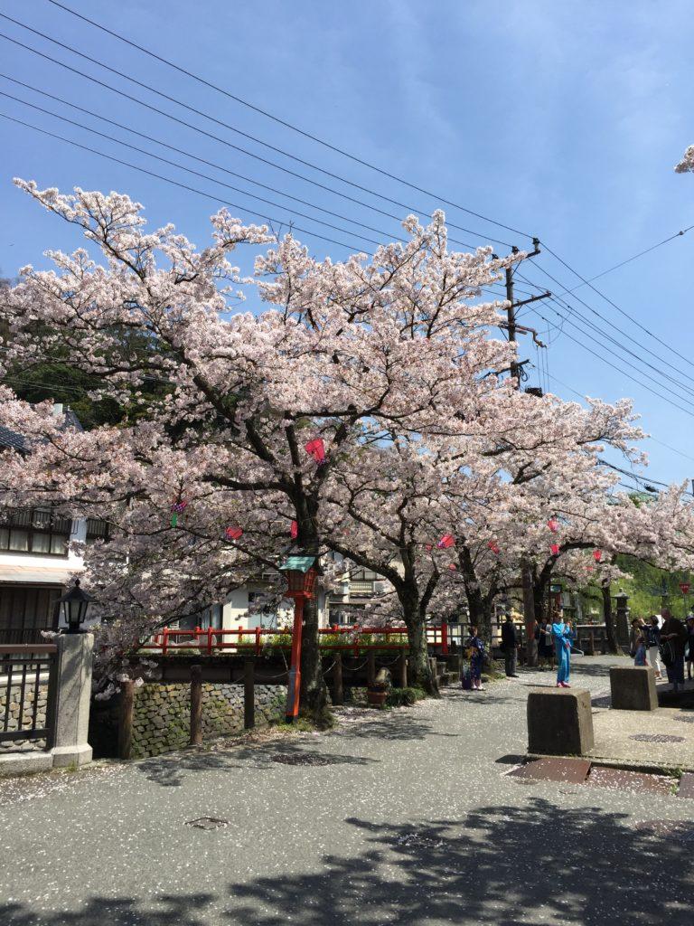 城崎温泉 観光 桜
